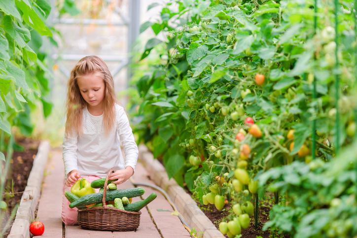 Funderar på att börja odla i växthus
